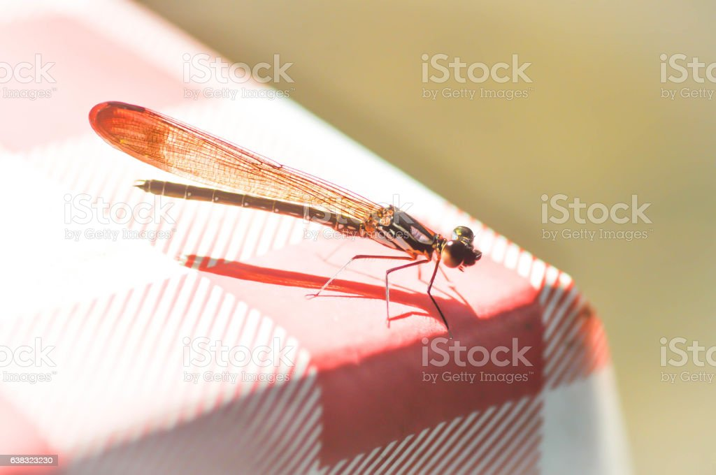 dragonfly on the table stock photo