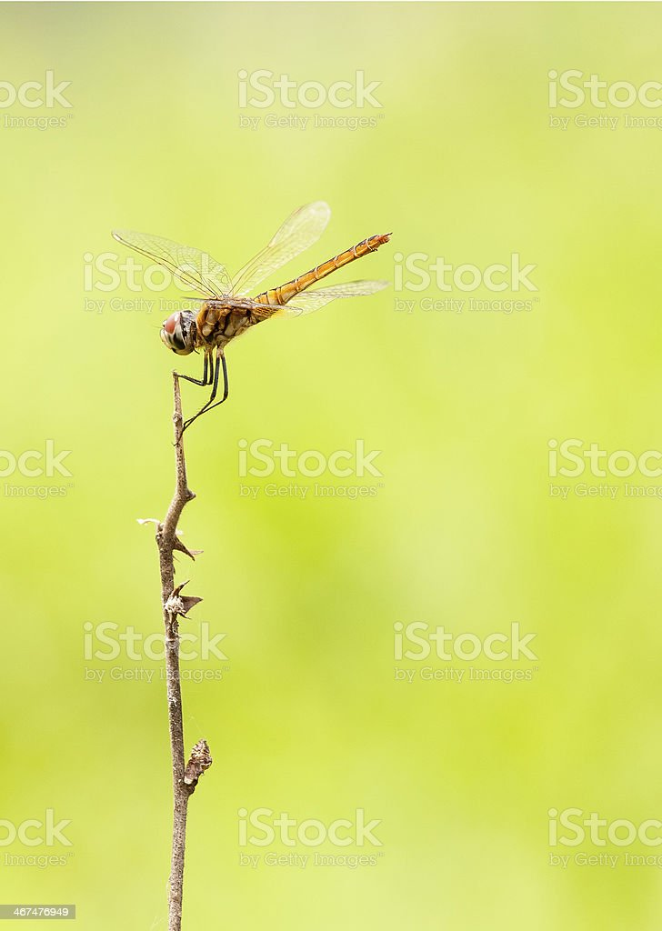 Dragonfly on top stock photo