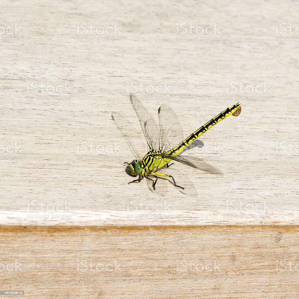 Dragonfly on wood royalty-free stock photo
