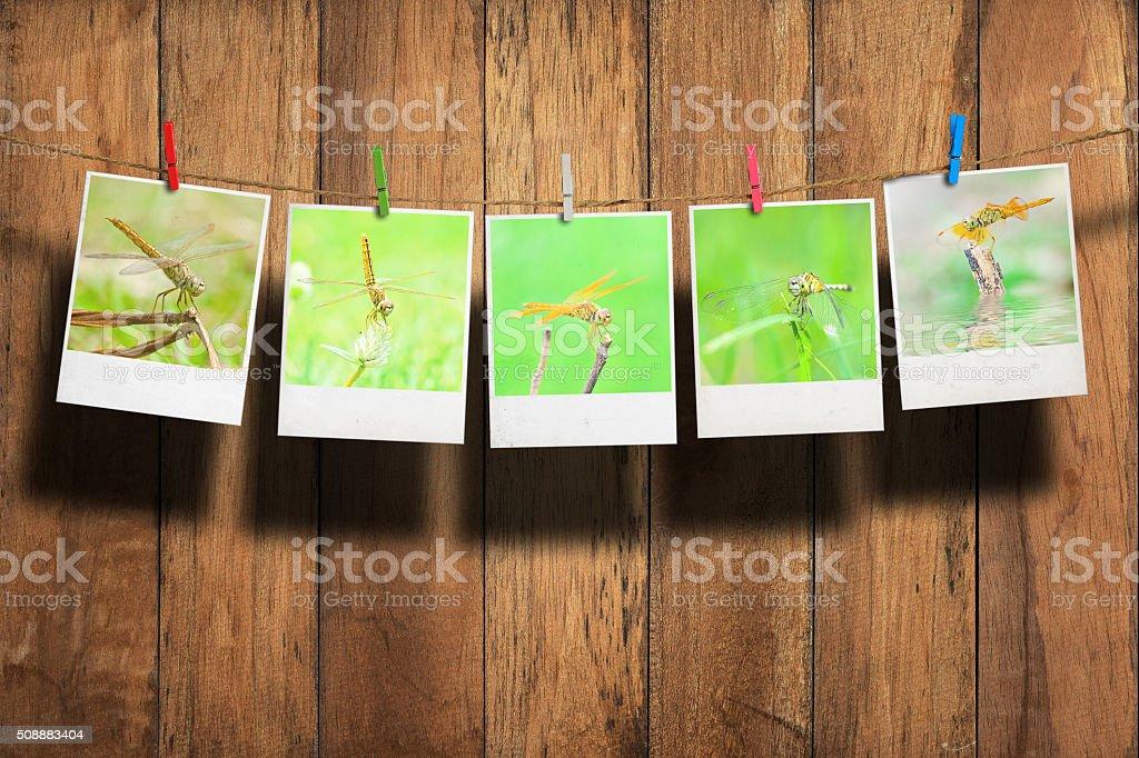 Dragonfly photo stock photo