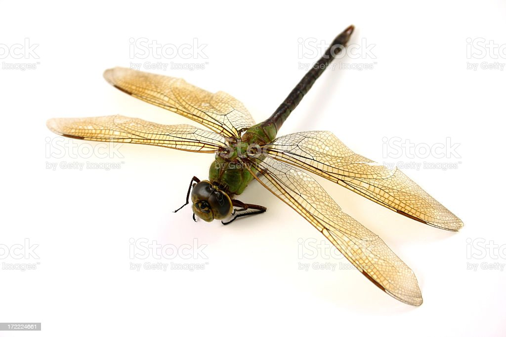 dragonfly. royalty-free stock photo