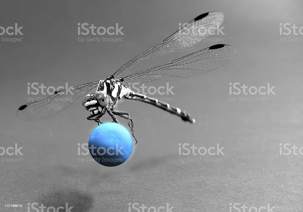 Dragonfly: Planet Catcher royalty-free stock photo