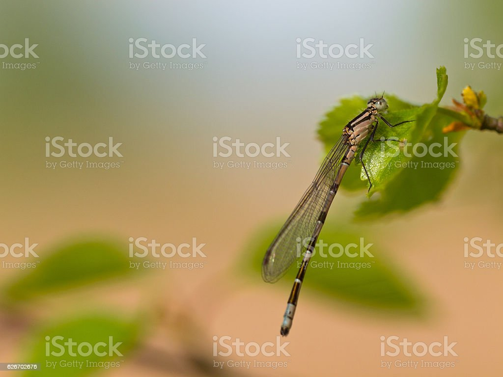 Dragonfly resting on leaf stock photo
