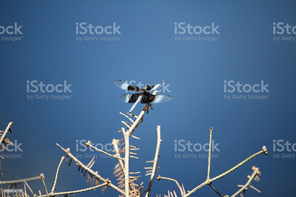 Dragonfly Rests on a Banch stock photo