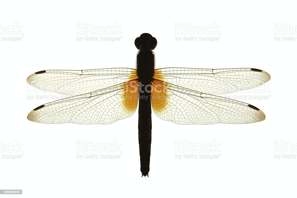 Dragonfly Silhouette royalty-free stock photo