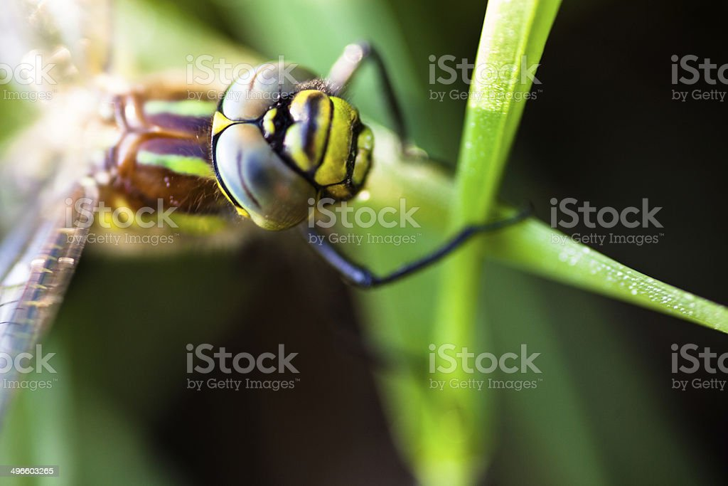 Dragonfly sitting on the green grass stock photo