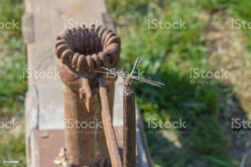 Dragonfly sitting on the handle of the manual Corn-crusher stock photo
