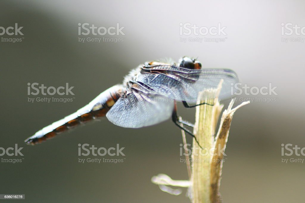 Dragonfly sitting stock photo
