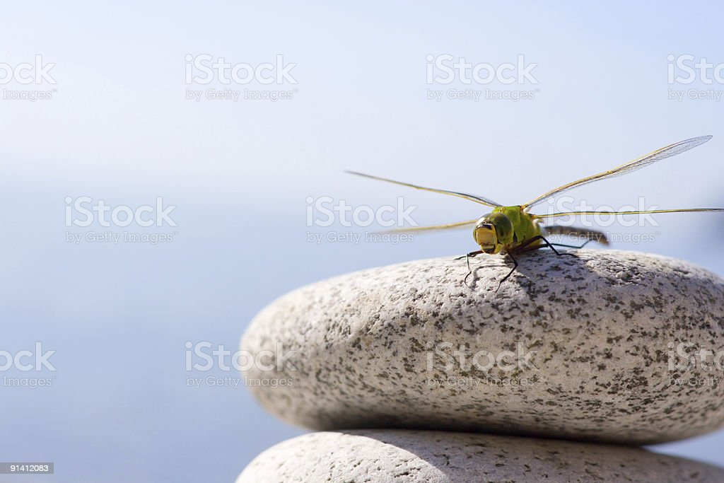 Dragonfly & stones royalty-free stock photo