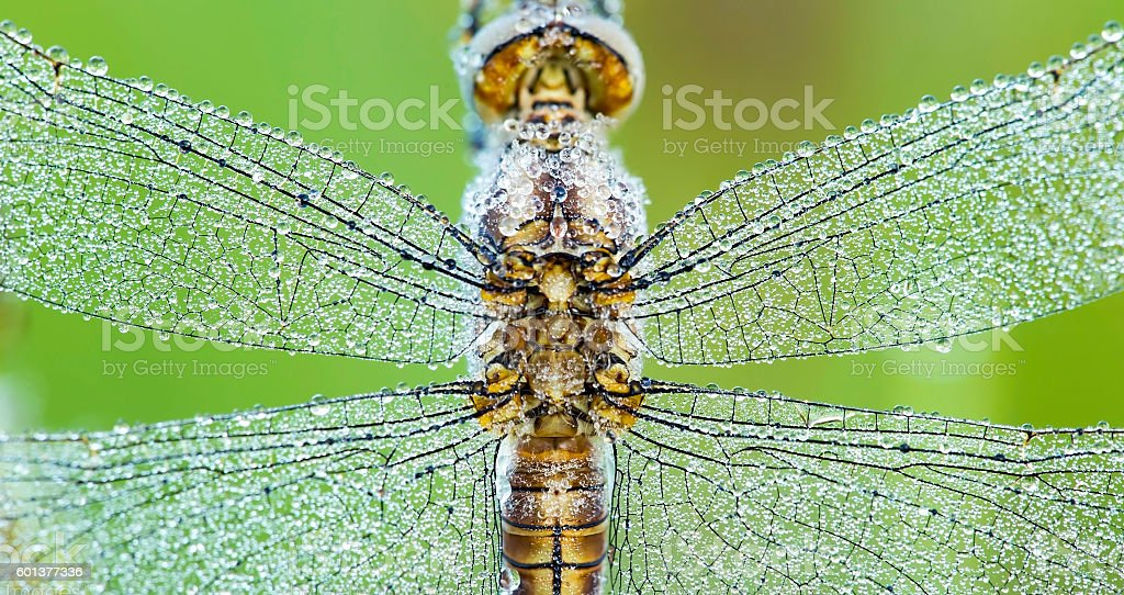 Dragonfly wings banner stock photo