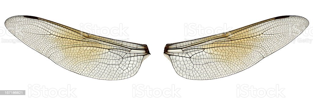 dragonfly wings stock photo