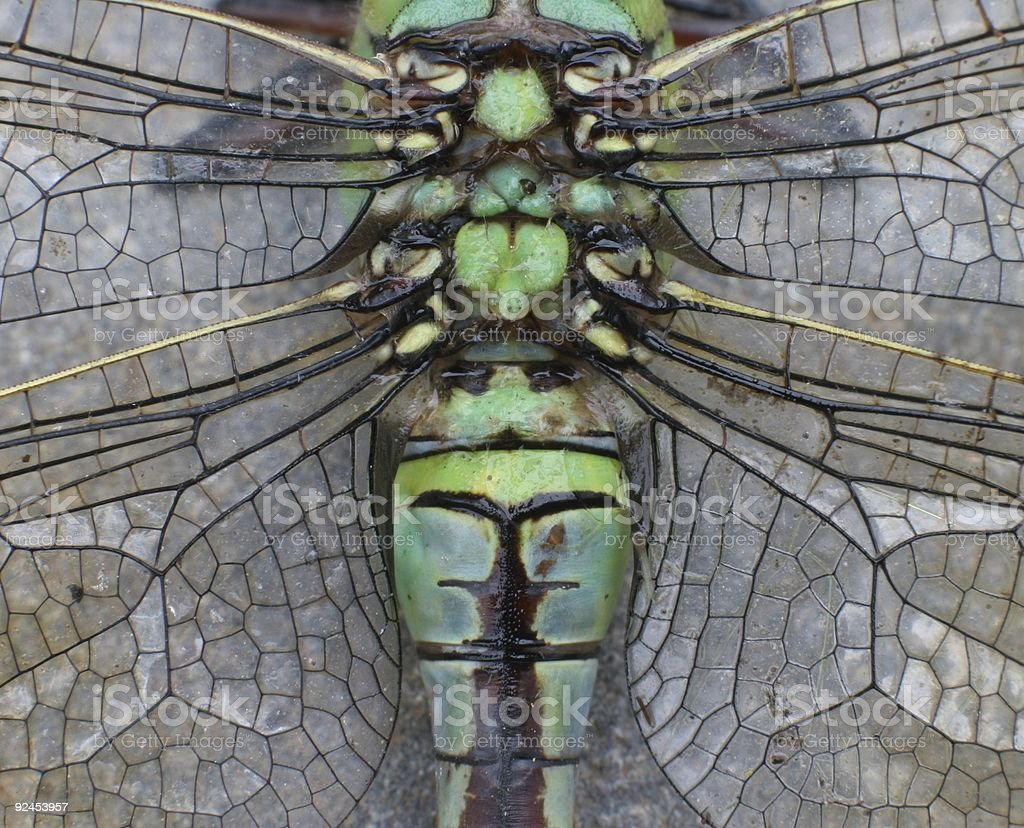 Dragonfly_back_wings royalty-free stock photo