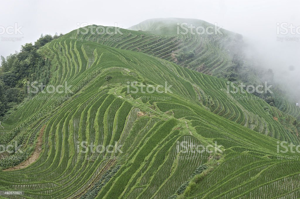 Dragon's Backbone rice terraces in the mist, Longsheng County, China royalty-free stock photo