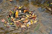 drain in autumn