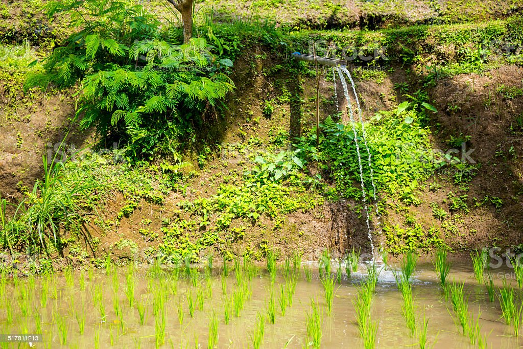 Drainage ditch to irrigate a rice field stock photo