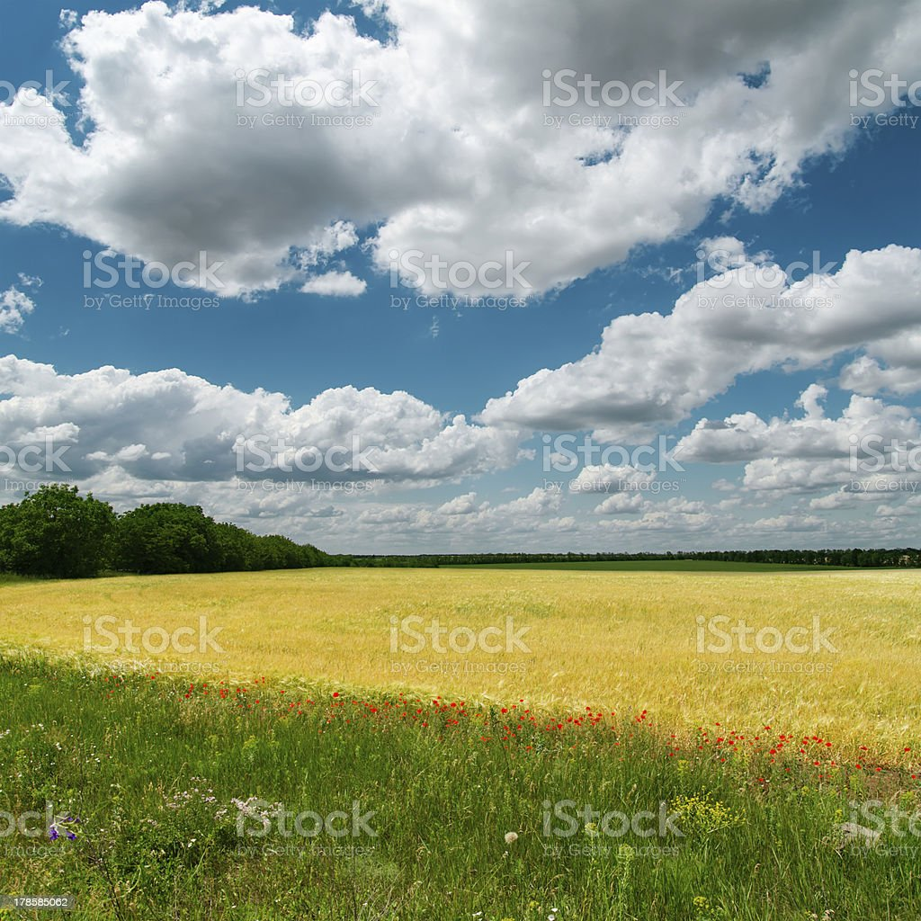 dramatic clouds over fields royalty-free stock photo