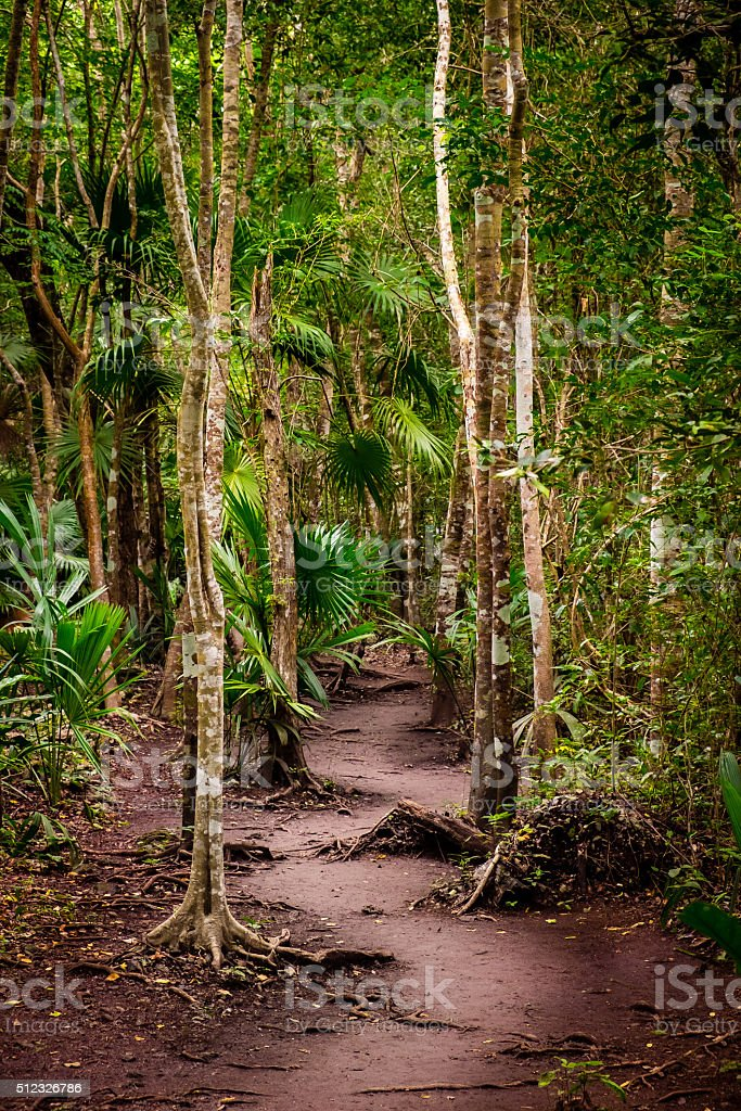 Dramatic landscape view of jungle trees and dirty pathway stock photo