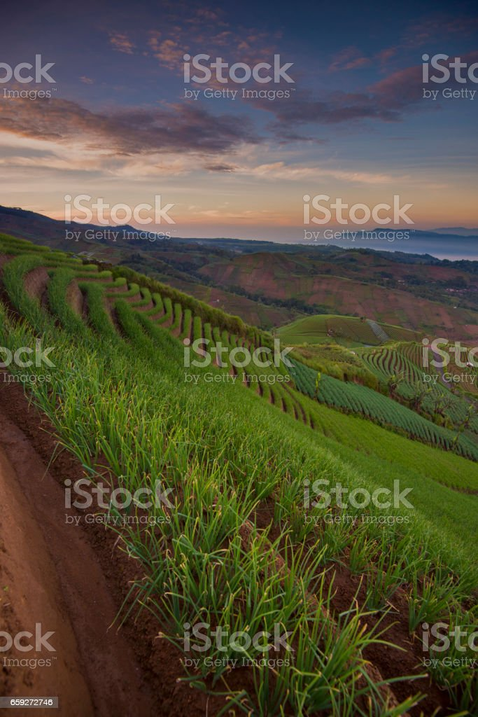 Dramatic morning in the beautiful union field in Indonesia stock photo