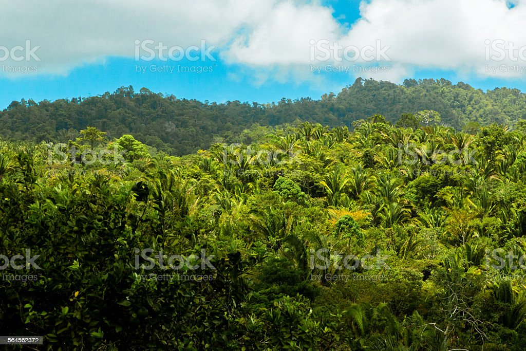 Dramatic Rainforest stock photo