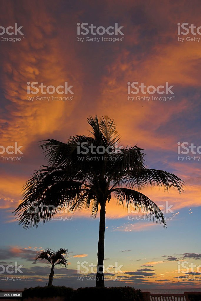 Dramatic red storm clouds with two palm trees stock photo