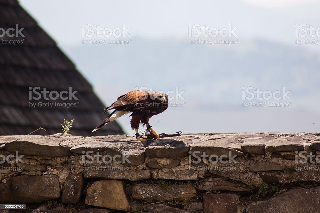 Dramatic shot of the sitting eagle. stock photo