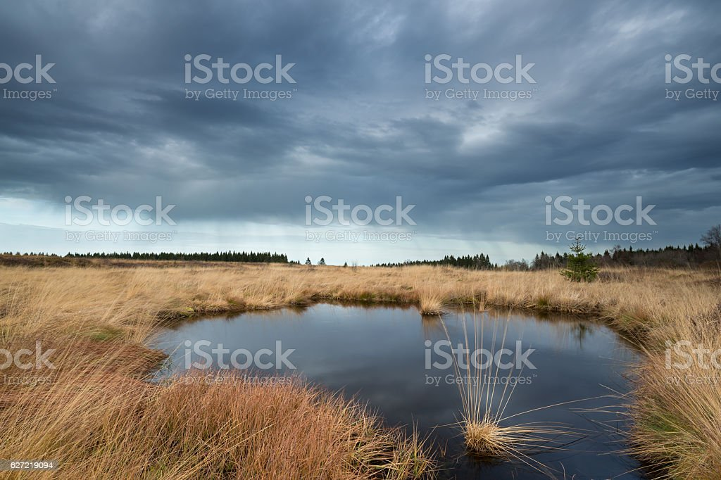 Dramatic sky by a pond in National Park Hautes Fagnes . stock photo
