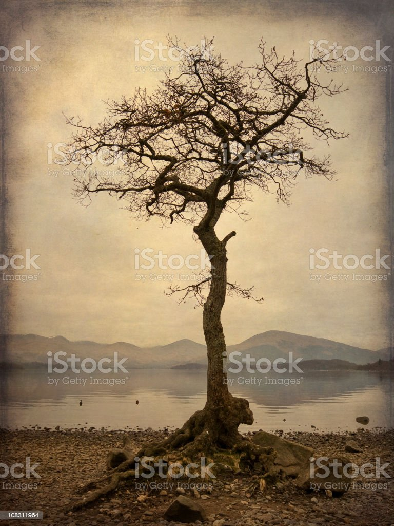 Dramatic solitary tree on Scottish Loch. royalty-free stock photo