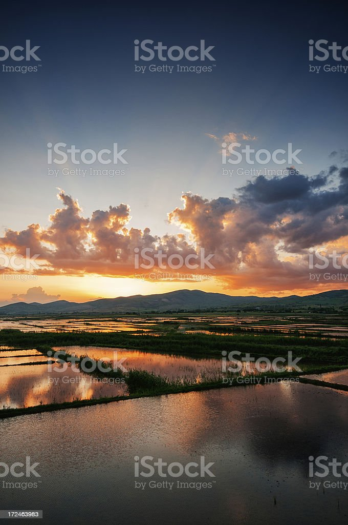 Dramatic Sunrise over Fresh Watered Rice Fields royalty-free stock photo