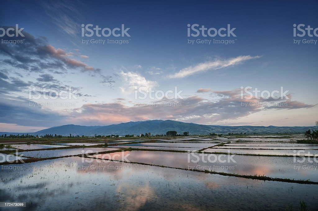 Dramatic Sunset over Fresh Watered Rice Fields royalty-free stock photo