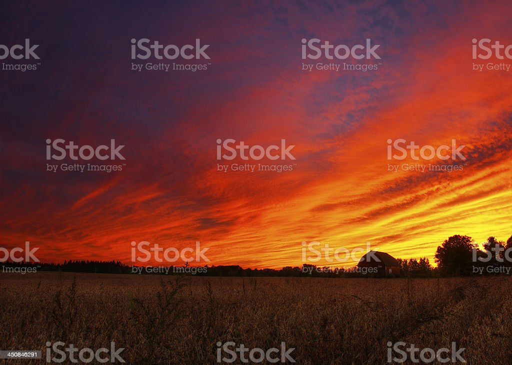 Dramatic sunset with barn and corn field royalty-free stock photo