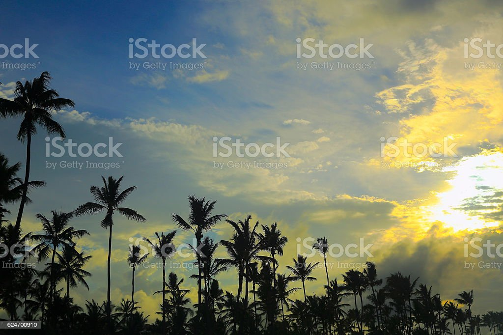 Dramatic Tropical paradise: Green coconut palm trees Silhouette sunset stock photo