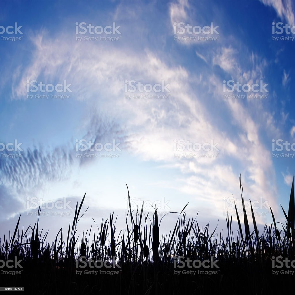 XXXL dramatic wetlands twilight royalty-free stock photo