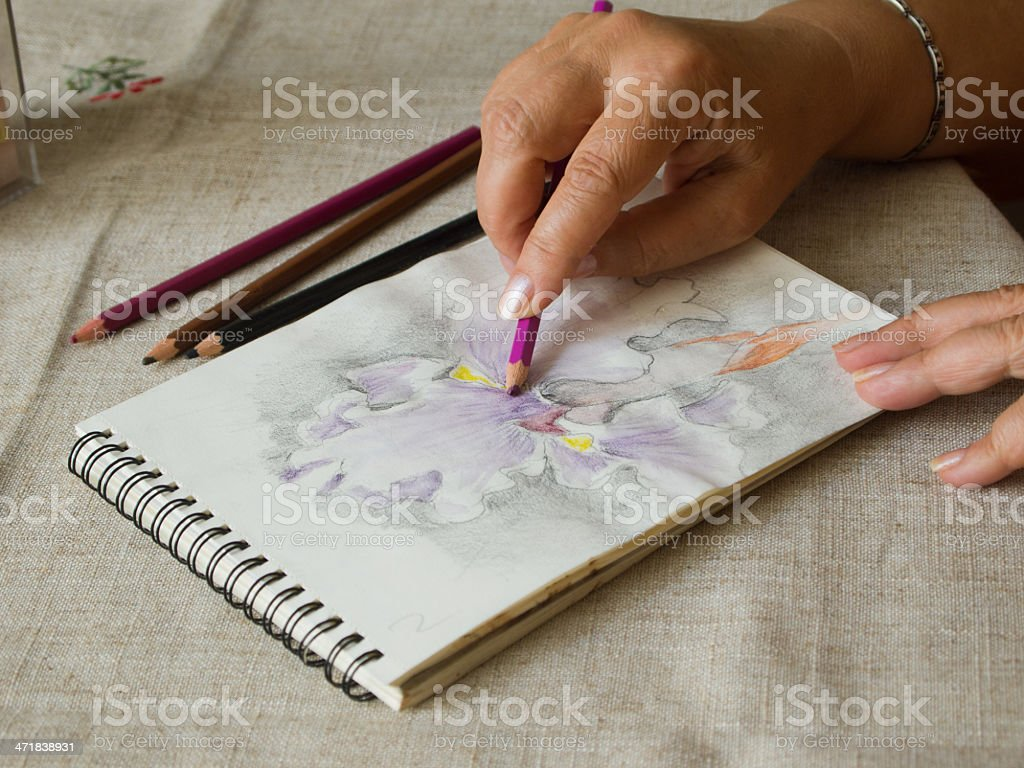Drawing an iris flower in a sketchbook royalty-free stock photo
