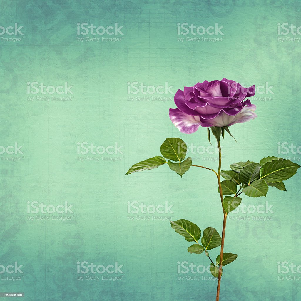 Drawing beautiful bouquets of roses on pastel background stock photo
