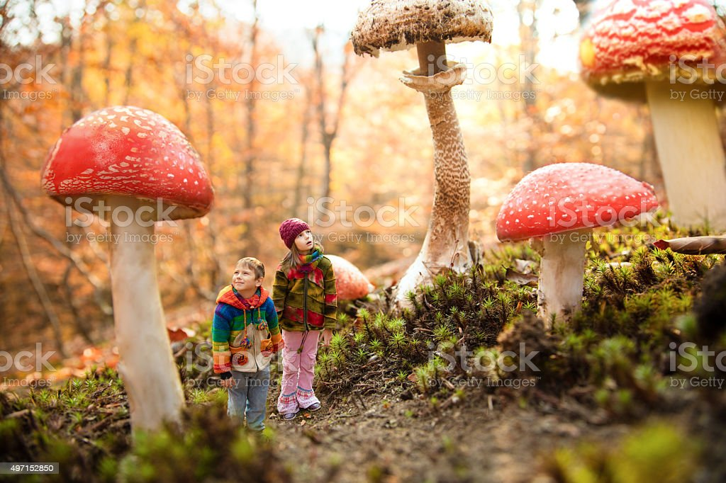 Dream about magic mashroom forest stock photo