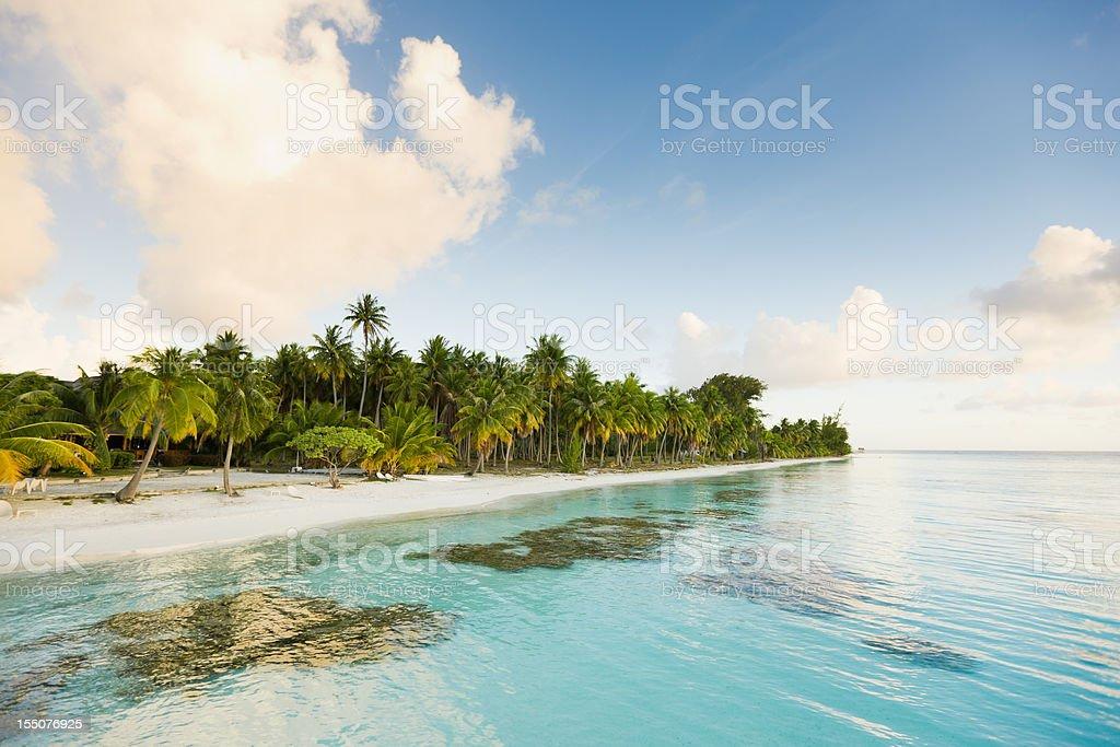 Dream Beach White Sand and Palm Trees Fakarava French Polynesia royalty-free stock photo
