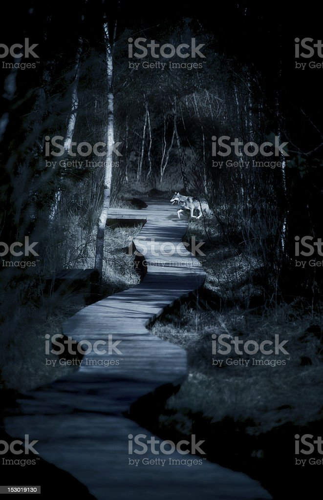 Dream of a dark path in the woods and encountering a wolf stock photo