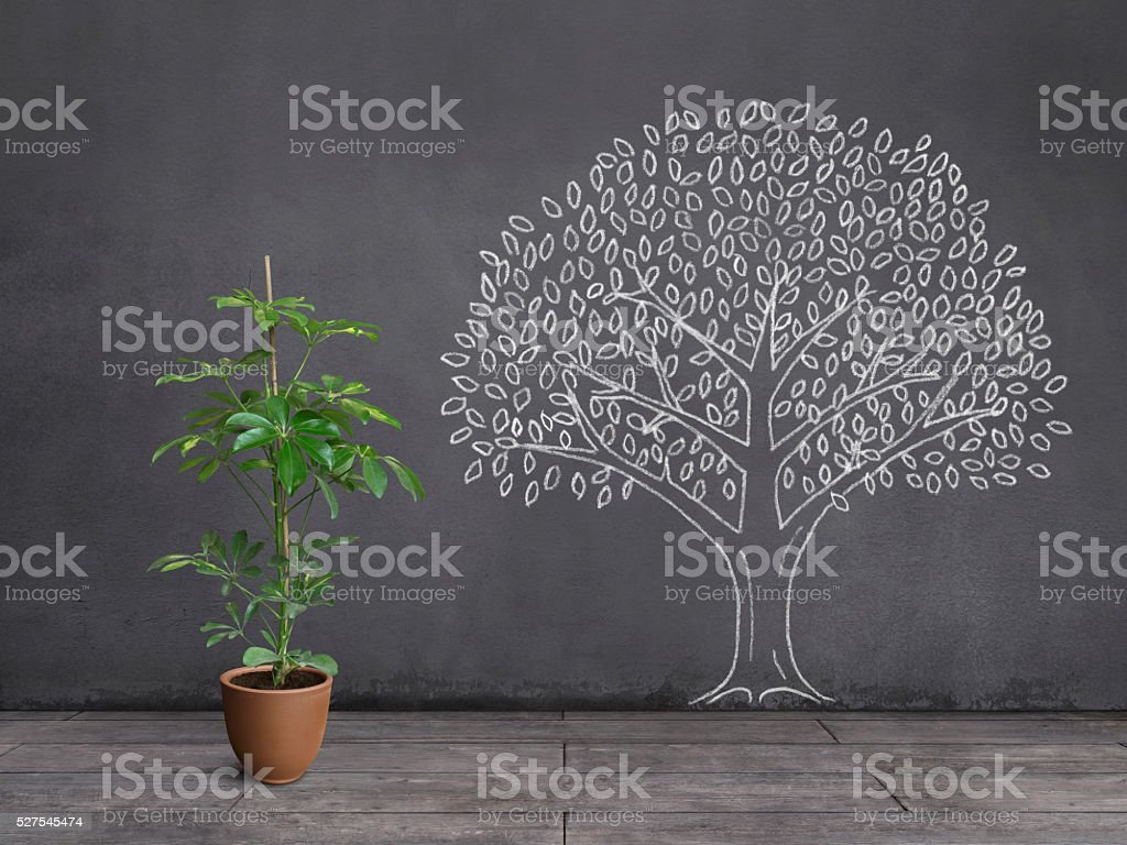 Dream of Houseplant: Being a Big Tree stock photo