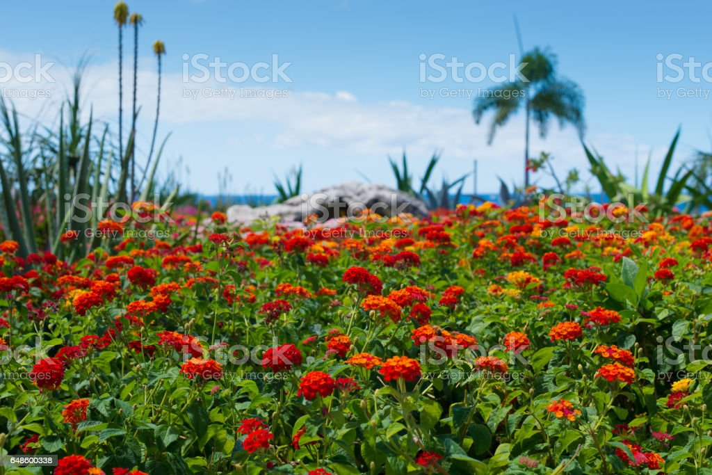 Dream travel destination all year - Carribean islands, blue sea and colorful flowers stock photo
