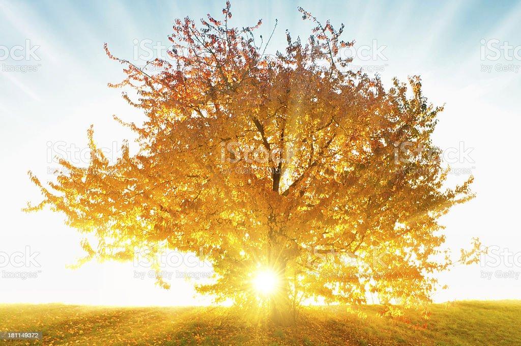 Dream tree royalty-free stock photo