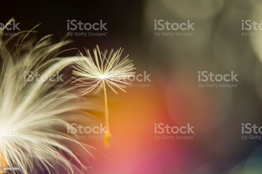 Dreamer stock photo