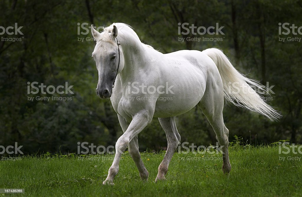 Dreamhorse royalty-free stock photo