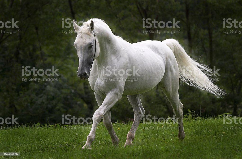 Dreamhorse stock photo