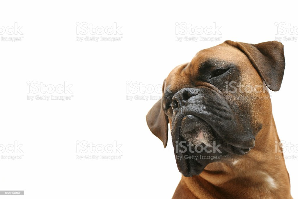 Dreaming about... royalty-free stock photo
