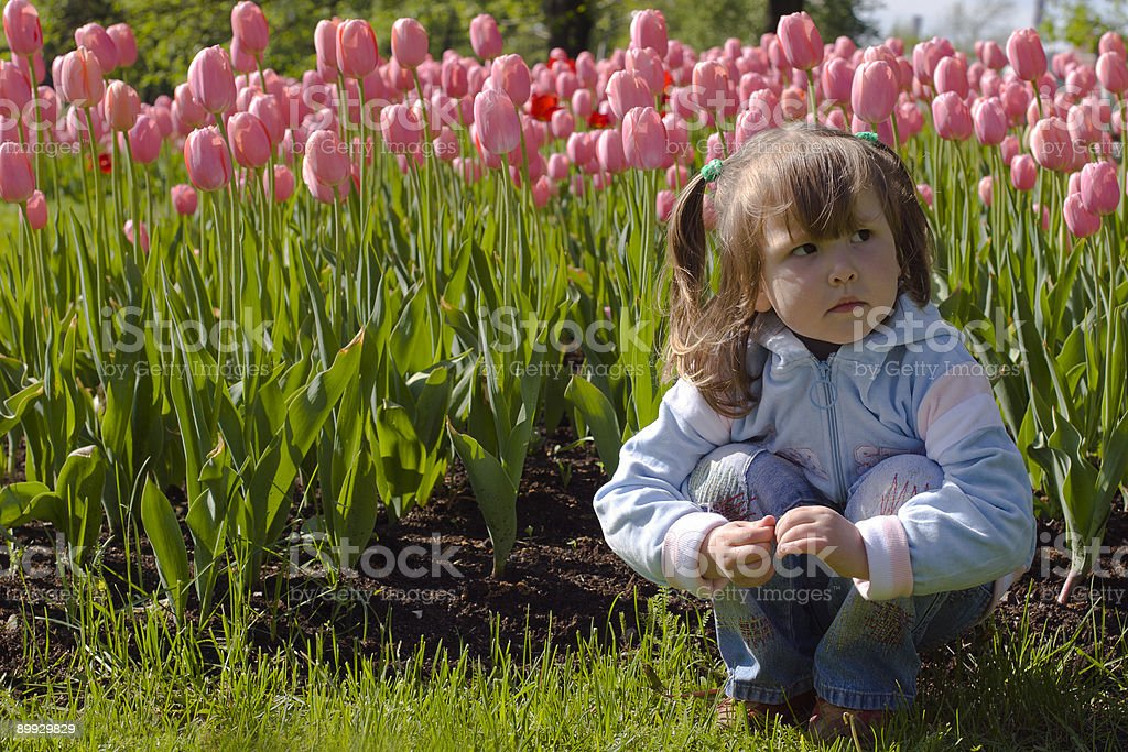 Dreaming in tulips royalty-free stock photo
