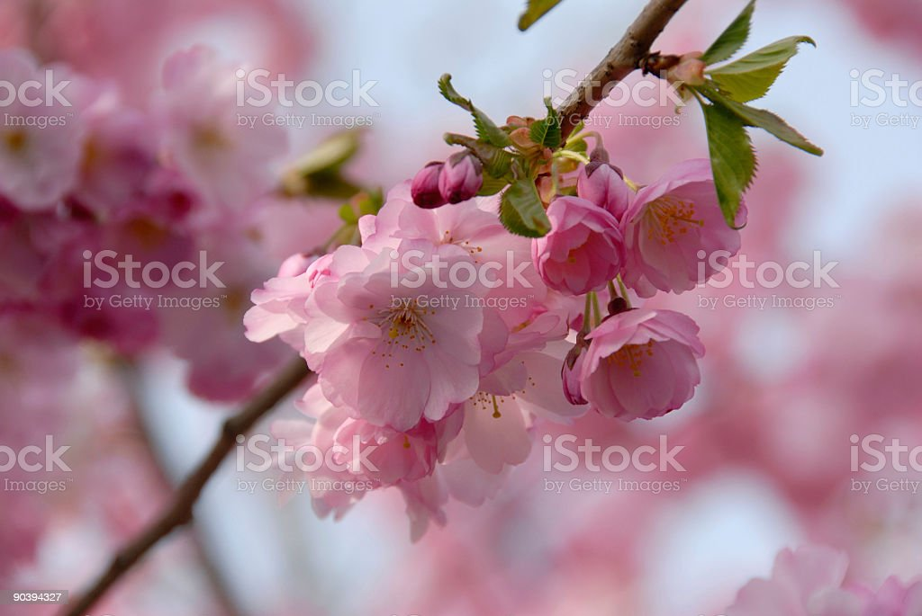 dreaming pink royalty-free stock photo
