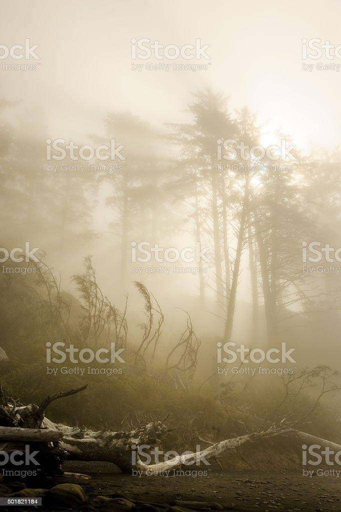 Dreamlike Morning Fog stock photo