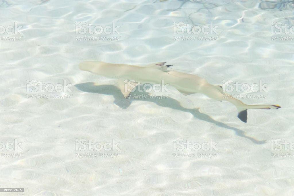 Dreamscape Escape with shark on Maldives stock photo