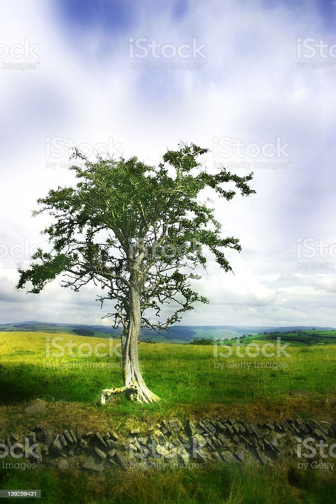 Dreamy and Solitary Tree royalty-free stock photo