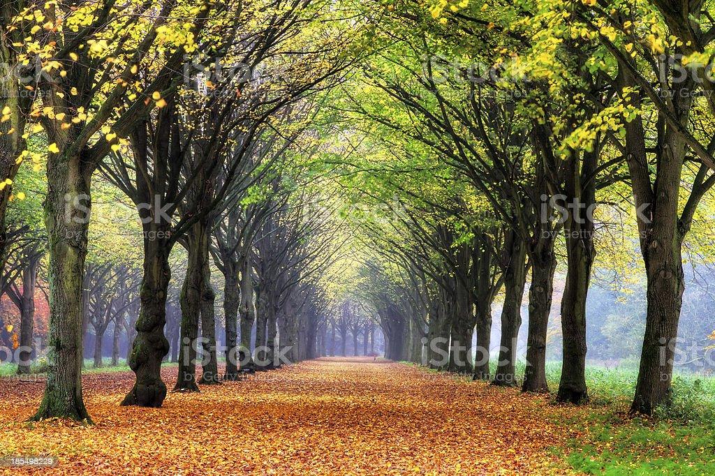 Dreamy autumn lane stock photo